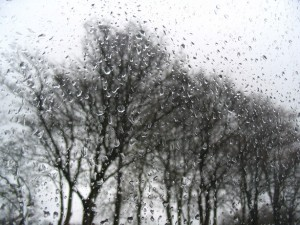 photo of leafless tree through a wet window