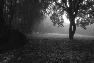 Photo of a forest meadow during twilight